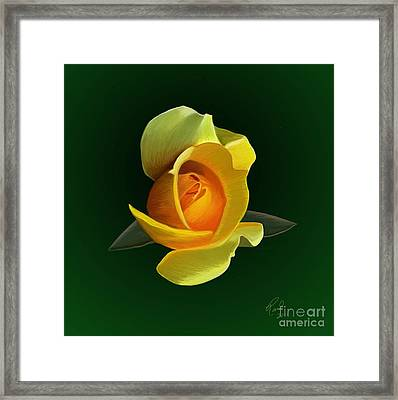 Yellow Rose Framed Print by Rand Herron