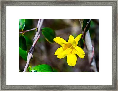 Framed Print featuring the photograph Yellow by Shannon Harrington