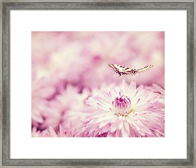 Yellow Swallowtail Butterfly Over Mums Framed Print by Jody Trappe Photography