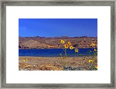 Yellow Sweet... Framed Print by Bonnie Stillman