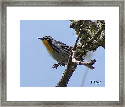 Framed Print featuring the photograph Yellow-throated Warbler by Roena King