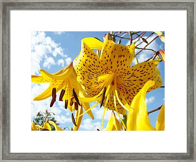 Yellow Tiger Lily Flowers Art Prints Lilies Framed Print