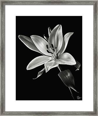 Yellow Tiger Lily In Black And White Framed Print by Endre Balogh