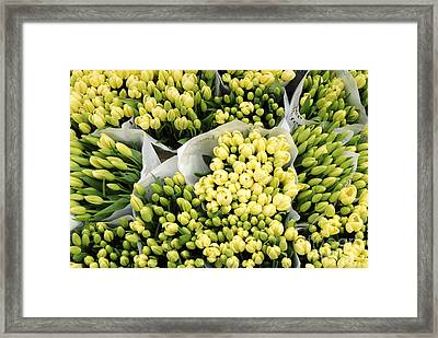 Yellow Tulips Framed Print by Ed Rooney