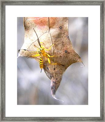 Yellow Wasp Framed Print by Warren Thompson
