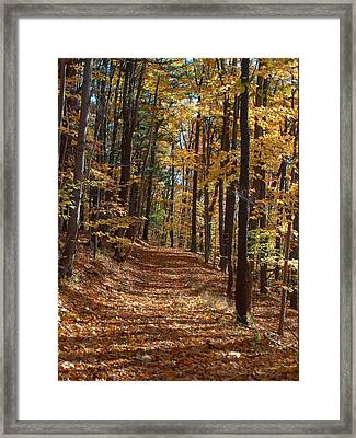 Yellow Wood Five Framed Print by Joshua House