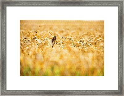 Yellowhammer Framed Print
