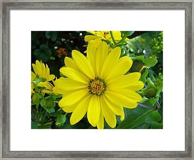 Yellowing Framed Print by Fredrik Ryden