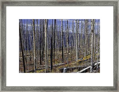 Yellowstone Lake Colors Framed Print