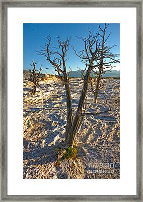 Yellowstone National Park - Minerva Terrace - Dead Tree Framed Print by Gregory Dyer