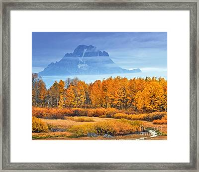 Yelow And Orange Autumn Grand Teton National Park Framed Print