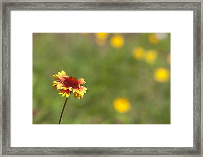 Framed Print featuring the photograph Yep...a Flower by John Crothers