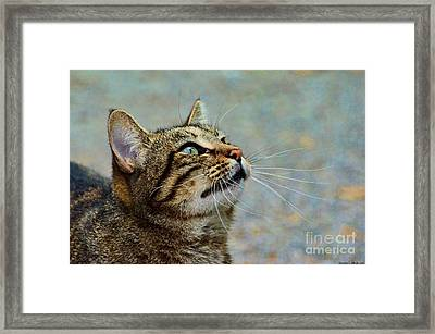 Yes I Am A Pretty Kitty Framed Print by Debbie Portwood