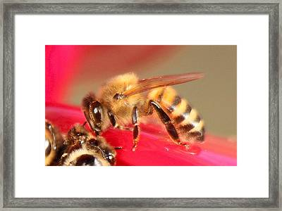 Yet Another Bee Framed Print