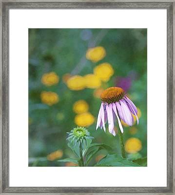 Framed Print featuring the photograph Yet Another Flower by John Crothers