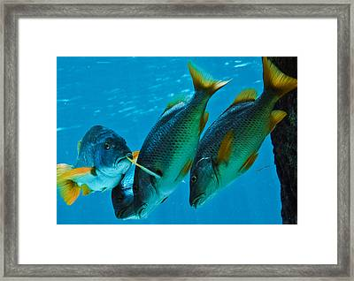Yo Yous Headin Da Wrong Way Framed Print by DigiArt Diaries by Vicky B Fuller
