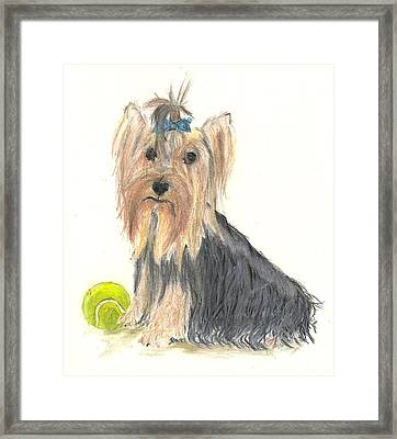 Yorkie Indy At Play Framed Print by Jessica Raines