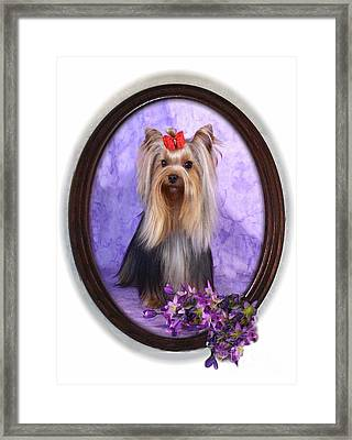 Yorkie With Violets Framed Print by Maxine Bochnia