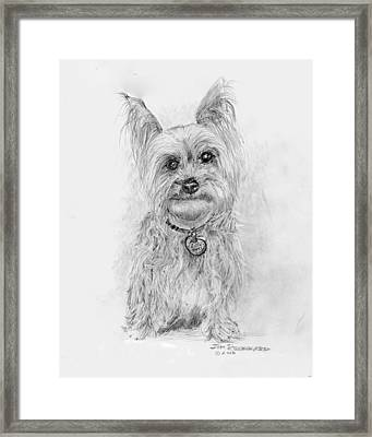 Yorkshire Terrier Framed Print by Jim Hubbard
