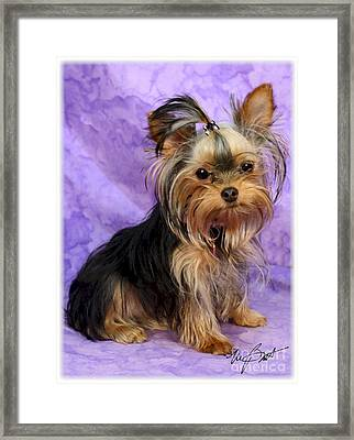 Yorkshire Terrier Pup Framed Print by Maxine Bochnia