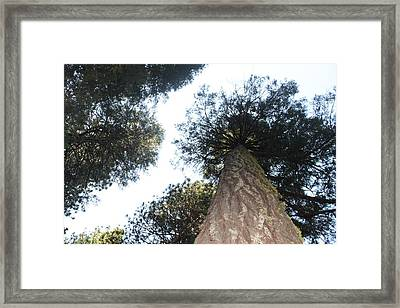 Yosemite Skyline Framed Print by Remegio Onia