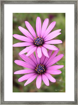 Framed Print featuring the photograph You And Me  by Amy Gallagher