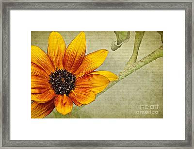 You Are My Sunshine Framed Print by Lois Bryan