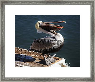You Are So Funny Framed Print by Paulette Thomas