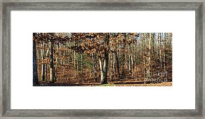 You Can Dream Framed Print