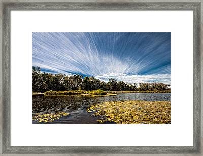 Framed Print featuring the photograph You Cannot Be Cirrus by Tom Gort