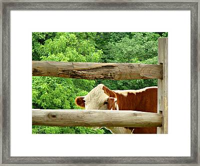 You Can't See Me Framed Print by Brenda Conrad