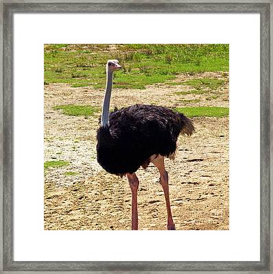You Look At Me I Look At You Framed Print by Patricia Griffin Brett