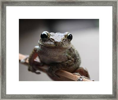 You Looking At Me Framed Print by Jeanne Andrews