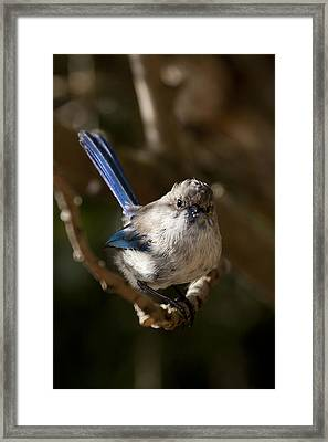 Framed Print featuring the photograph You Looking At Me by Serene Maisey