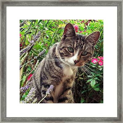 You Looking At Me Framed Print by Sharon Lisa Clarke