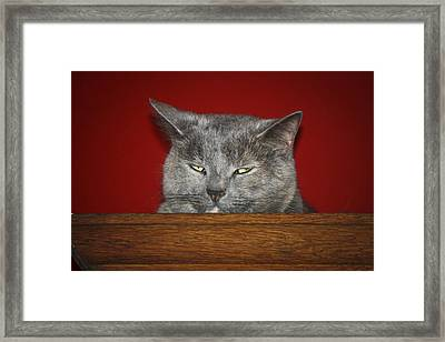 You May Think I Am Sleeping Framed Print by Teresa Mucha