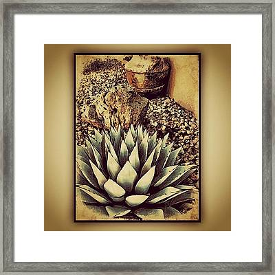 Young Agave Framed Print