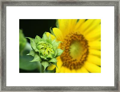 Young And Old Framed Print