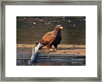 Young And Proud Framed Print by Cheryl Baxter