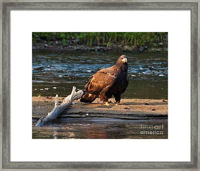 Young And Wise Framed Print by Cheryl Baxter