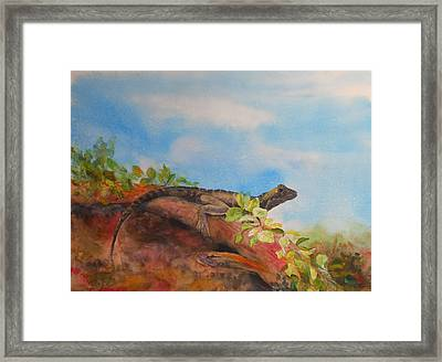 Young Australian Water Dragon Framed Print by Carol McLagan