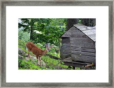 Framed Print featuring the photograph Young Buck At Treehouse Hopatcong by Maureen E Ritter