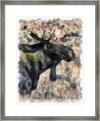 Framed Print featuring the photograph Young Bull Moose by Clare VanderVeen