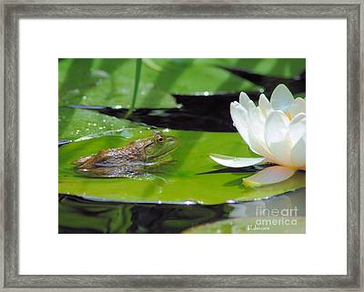 Young Bullfrog Framed Print by Tamera James