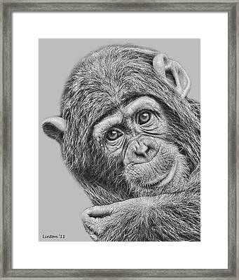 Young Chimp 5 Framed Print
