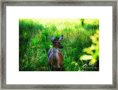 Young Deer Framed Print