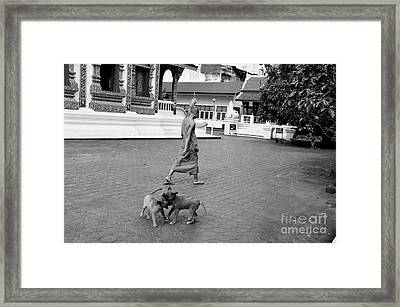 Young Dogs Framed Print by Dean Harte