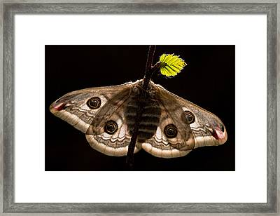 Young Growth Framed Print by Dmitri Pavlov