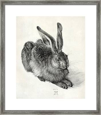 Young Hare, By Durer Framed Print by Sheila Terry