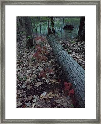 Framed Print featuring the photograph Young Maple At The Swamp by Gerald Strine